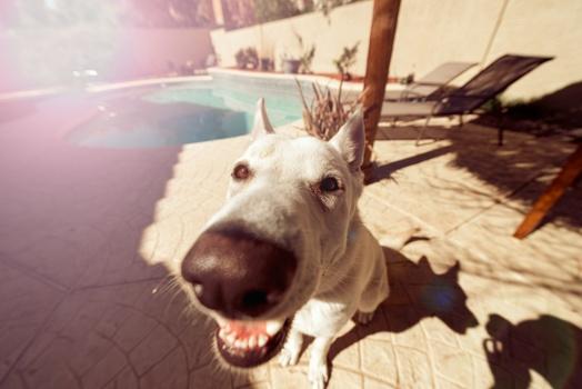 animal-dog-pet-snout-medium